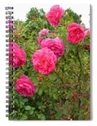 Coming Up Rosy Spiral Notebook
