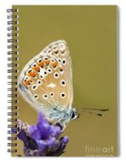 Common Blue Spiral Notebook