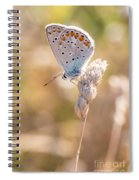 Common Blue Butterfly Spiral Notebook