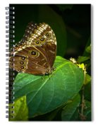 Common Blue Morpho Moth Spiral Notebook