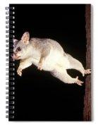 Common Brush-tailed Possum Spiral Notebook
