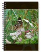 Common Buckeye Butterfly - Junonia Coenia Spiral Notebook