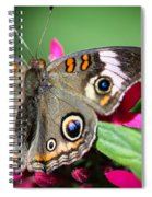 Common Buckeye Junonia Coenia Spiral Notebook