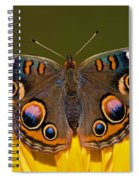 Common Buckeye Spiral Notebook