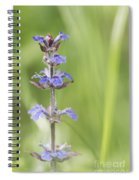 Common Bugle Spiral Notebook