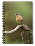 Common Chaffinch Spiral Notebook