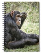 Common Chimpanzee  Pan Troglodytes Spiral Notebook