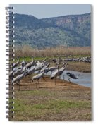 Common Crane Grus Grus Spiral Notebook