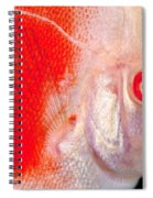 Common Discus Spiral Notebook