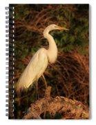 Common Egret Of Palestine Lake Spiral Notebook