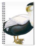 Common Eider Spiral Notebook