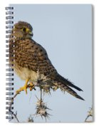 Common Kestrel Falco Tinnunculus 3 Spiral Notebook