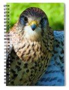 Common Kestrel  Spiral Notebook