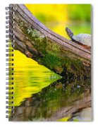 Common Map Turtle Spiral Notebook