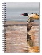 Common Merganser In Flight Spiral Notebook