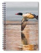 Common Merganser In Flight Square Spiral Notebook
