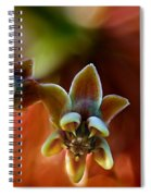 Common Milkweed Spiral Notebook