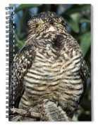 Common Nighthawk Napping Spiral Notebook