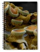 Common Orange Lichen Spiral Notebook