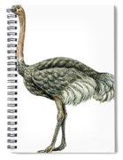 Common Ostrich Spiral Notebook