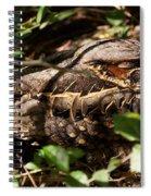 Common Pauraque Spiral Notebook