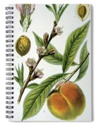 Common Peace Persica Vulgaris Spiral Notebook