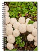 Common Puffball Mushrooms Lycoperdon Perlatum Spiral Notebook