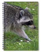 Common Raccoon Spiral Notebook