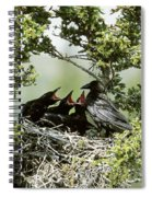 Common Raven Feeding Young In Nest Spiral Notebook