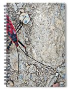 Common Red Bug Along The Seti River Road-nepal  Spiral Notebook