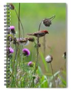 Common Redpoll In A Field Of Thistle Spiral Notebook