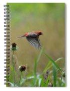 Common Redpoll In Flight Spiral Notebook