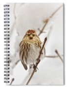 Common Redpoll Spiral Notebook