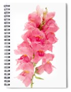 Common Snapdragon Spiral Notebook