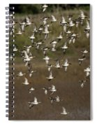 Common Teal Anas Crecca 1 Spiral Notebook
