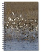 Common Teal Anas Crecca Spiral Notebook
