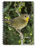 Common Yellowthroat Hen Spiral Notebook