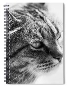 Concentrating Cat Spiral Notebook