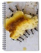 Concerted Action Spiral Notebook