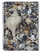 Conch Among A Sea Of Shells Spiral Notebook