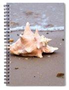 Conch Spiral Notebook