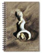 Conch Shell Spiral Spiral Notebook