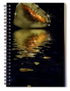 Conch Sparkling With Reflection Spiral Notebook