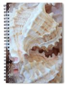 Conches Spiral Notebook