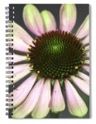 Cone Display Spiral Notebook