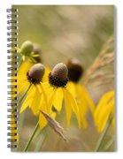Cone Flower 8340 Spiral Notebook