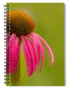 Coneflower - Summer Color Spiral Notebook