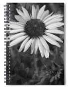 Coneflower And Dusty Miller Bw Spiral Notebook