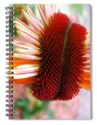 Coneflower Bloom Unspiraling Spiral Notebook