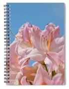Confectioners Pink Spiral Notebook